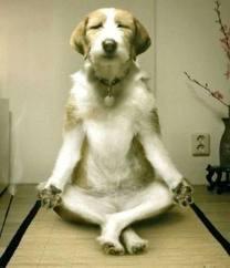 como-tener-un-perro-tranquilo